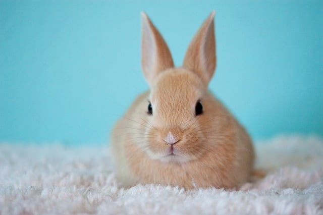 Best Bedding for Rabbits