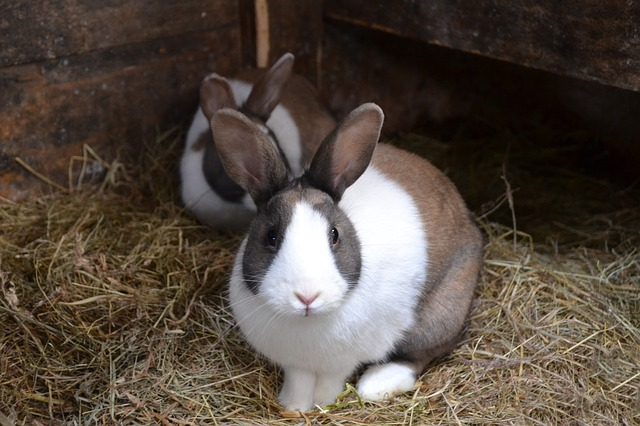 How to Find The Best Rabbit Bedding