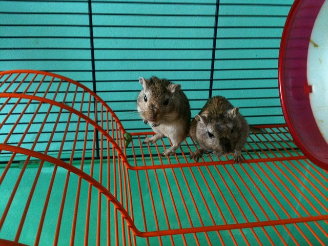 How Many Gerbils Can Live in a Cage