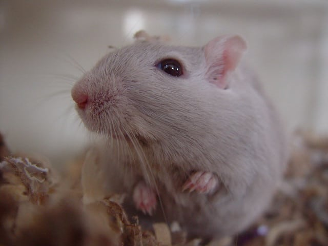 Things to Consider Before Buying a Gerbil Bedding